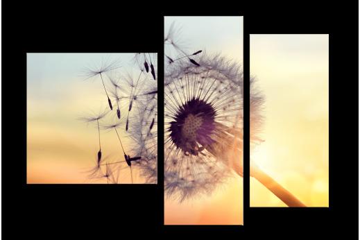 Модульная картина Одуванчик на закате