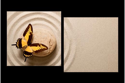 Модульная картина Бабочка на камне